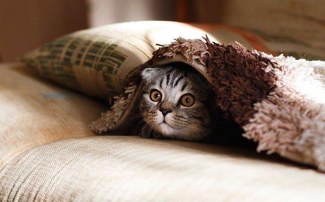 animales-gato-casa